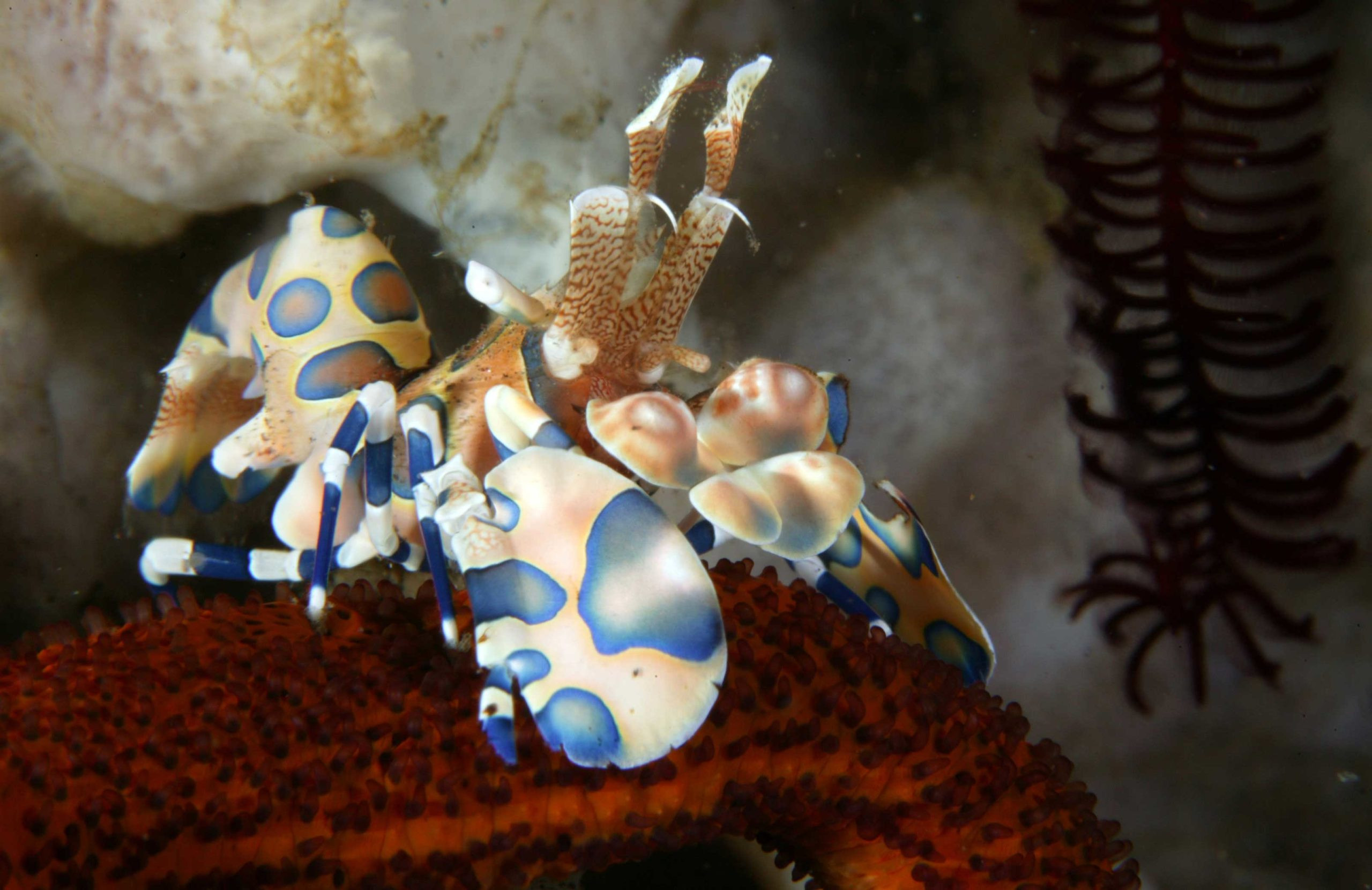Blue Season Bali - Scuba Diving in Bali