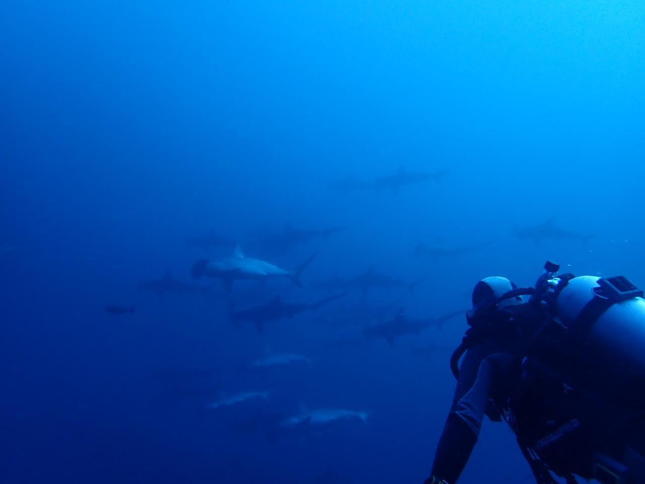 Dive Center in Alor - Diving in Alor