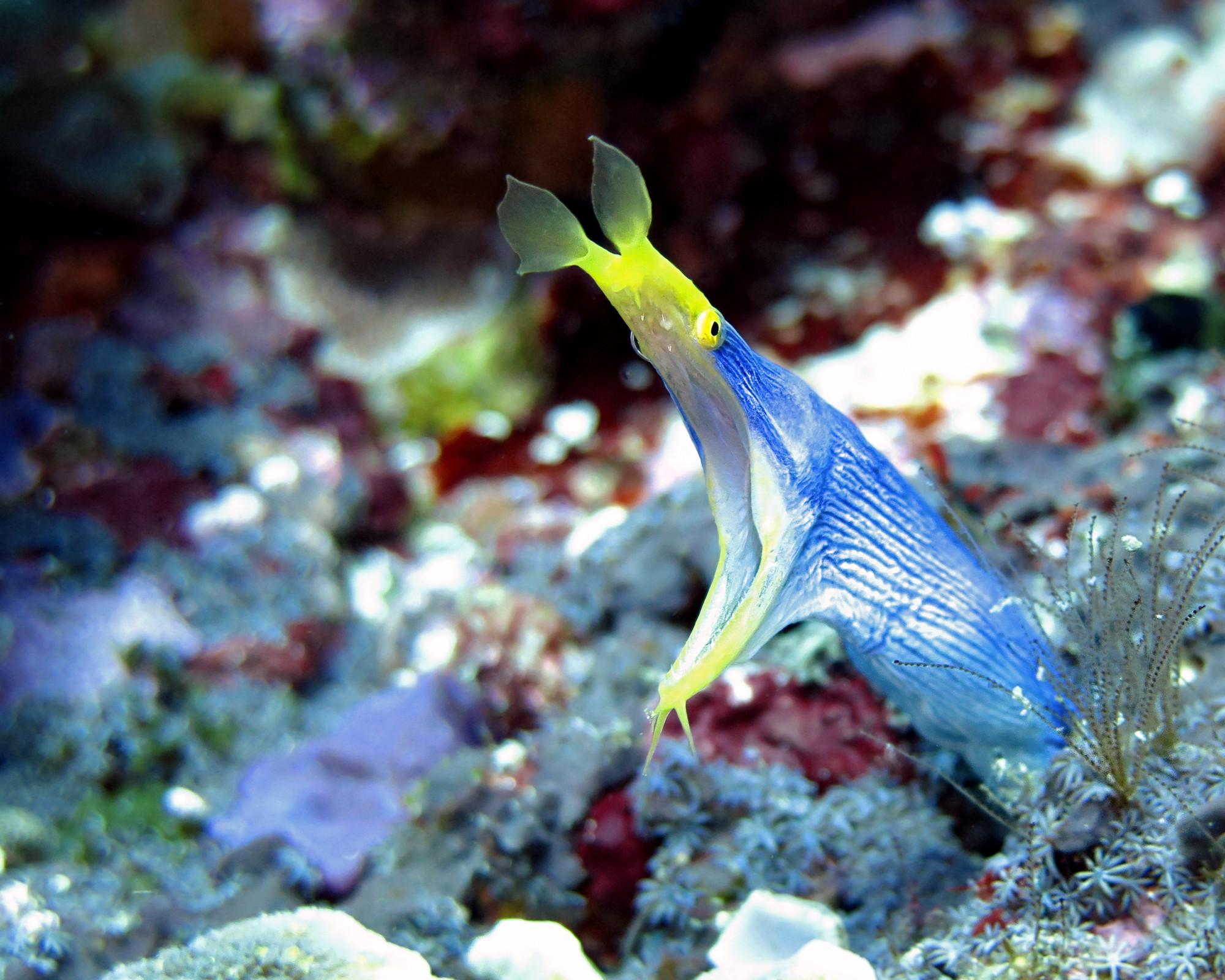 Octopus Dive Indonesia - Scuba Diving in Nusa Penida