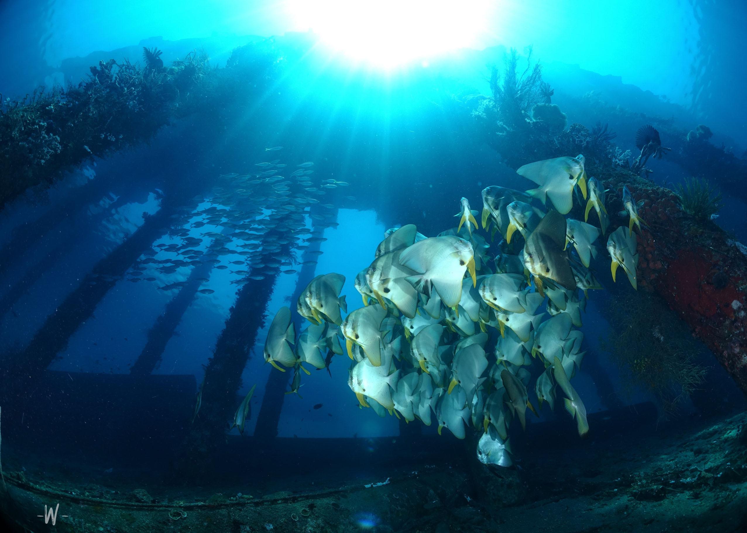 Air Dive Alor - Scuba Diving in Alor
